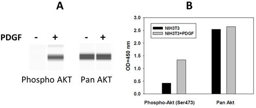 Figure 5. Comparison of results using A) immunoprobing and B) sandwich-based ELISA. NIH3T3 cells were grown to 80% confluency and then serum starved overnight. Cells were either untreated or treated with PDGFβ for 10 min, which did not increase the total amount of AKT but did increase the amount of phosphorylated AKT at serine 473.